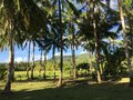 Palmtrees landscape in the morning farm land with of anda bohol philippines Stock Photo