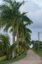 Palmtrees at rust en werk plantation suriname Stock Photo