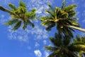 Palmy kokosowe Zdjęcie Stock