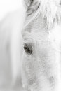 Palomino horse eye - black and white Royalty Free Stock Photo