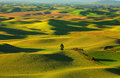 Palouse rolling hills beautiful landscape of Stock Images