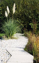 Pampas grass and garden path Royalty Free Stock Photo