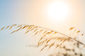 Pampas with sun and sky in the background a blue Stock Image