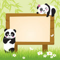 Panda and Bamboo Stock Image