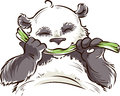 Panda with bamboo fat happy eating Stock Photos