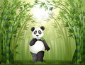 A panda in the bamboo forest illustration of Stock Photo
