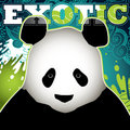 Panda banner Royalty Free Stock Photo