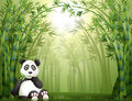 A panda bear and bamboo forest illustration of sitting in Stock Image