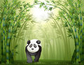 A panda bear and a bamboo forest illustration of walking in Royalty Free Stock Images
