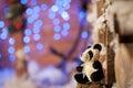 Panda bear Christmas tree toy wodden detalis blue Royalty Free Stock Photo