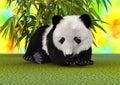 Panda Bear Cub Royalty Free Stock Photo