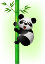 Panda climbing bamboo tree Stock Images