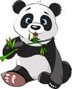 Panda eating bamboo Royalty Free Stock Photo