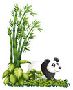 A panda hiding illustration of on white background Stock Photos