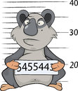 Panda the prisoner criminal mug shot grey with number in paws Royalty Free Stock Photos