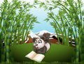 A panda reading at the hilltop with bamboos illustration of Royalty Free Stock Photos
