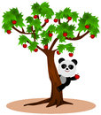 Panda s apple a cartoon happily taking apples from a tree Royalty Free Stock Image