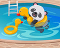 Panda swimming with duck tube Stock Photo