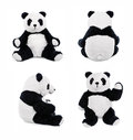 Panda teddy bear positions teddybear showing different set of Royalty Free Stock Images
