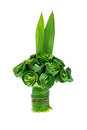 Pandanus Palm leaves are folded roses. Royalty Free Stock Photo