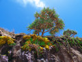 Pandanus Palm Tree on a Cliff Royalty Free Stock Photo