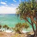Pandanus Palm Tree Royalty Free Stock Photo