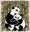 Pandas family  in the bamboo forest Royalty Free Stock Image