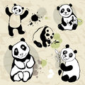 Pandas set. Stock Photography