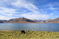 Pangong lake in Ladakh Stock Photography
