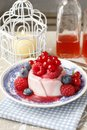 Panna cotta italian dessert Royalty Free Stock Photo