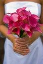 Panna młoda kwiaty Fotografia Stock