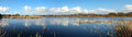 Panorama of Big Swamp Bunbury West Australia Royalty Free Stock Photo