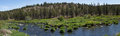 Panorama conifer forest along the deschutes river in the high desert of central oregon near redmond Stock Photos