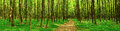 Panorama of deciduous forest nature background Royalty Free Stock Photography