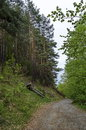 Panorama of ecological path through a  green springtime forest Royalty Free Stock Photo