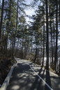 Panorama of ecological path through  green winter forest, Lozen mountain, Pancharevo Royalty Free Stock Photo