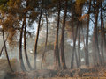 Panorama evening forest with fog in the background of the sky Royalty Free Stock Photos