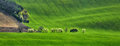 Panorama of field waves with blossoming trees Royalty Free Stock Photo