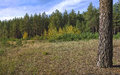 Panorama with forest sunshine day in the Stock Photography