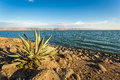 Panorama of the galilee sea israel from capernaum Royalty Free Stock Photography
