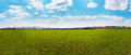 Panorama of green field and blue sky panoramic view spring Stock Images
