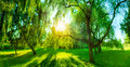 Panorama of green summer park. Sun shining through trees, leaves. Royalty Free Stock Photo