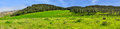 Panorama hills, forest and green fields Stock Photo