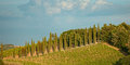 Panorama of the hills of San Gimignano, Tuscany in Italy. Royalty Free Stock Photo