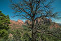 Panorama of Kolobs Canyons with Trees in the Foreground in Zion National Park, Utah on a Clear Day Royalty Free Stock Photo