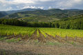 Panorama Landscape of a green Vineyards in Chianti Royalty Free Stock Photo