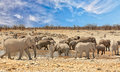Panorama of a large herd of elephants and zebras around a waterhole in Etosha National Park Royalty Free Stock Photo