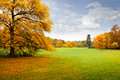 Panorama. Lonely beautiful autumn tree. Autumn. Royalty Free Stock Image