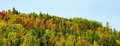 Panorama of mountain with colorful trees Royalty Free Stock Photo