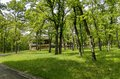 Panorama of a path through a lush green summer forest Royalty Free Stock Photo